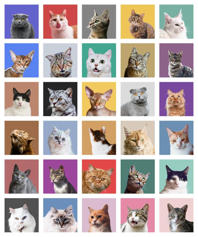Animal Avatar Free - UI Freebies